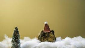 Weihnachtsmeerschweinchen Lizenzfreie Stockbilder