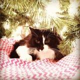 Weihnachtsmiezekatze Lizenzfreie Stockfotos
