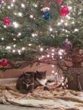 Weihnachtsmiezekatzen Lizenzfreies Stockfoto