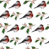 Weihnachtsnahtloser Hintergrund mit Stechpalmenbeeren Lizenzfreie Stockbilder