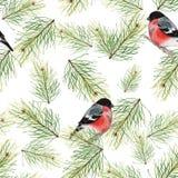 Weihnachtsnahtloses Muster mit Dompfaffen und Tannenzweigen 2 Lizenzfreies Stockfoto