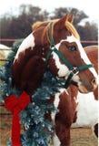 Weihnachtspferd Stockfotografie