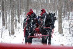 Weihnachtspferde an einem Snowy-Tag stockbild
