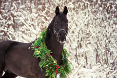 Weihnachtsporträt des schwarzen schönen Pferds Stockfoto