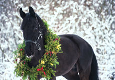 Weihnachtsporträt des schwarzen schönen Pferds Stockbilder