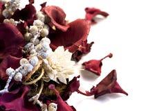 Weihnachtspotpourriblumen auf weißem Hintergrund Stockfotografie