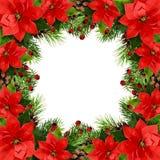 Weihnachtsrahmen mit den Kiefernzweigen, den Kegeln, den Beeren und ponsettia Florida Stockbilder
