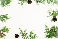 Weihnachtsrahmen von Kiefernniederlassungen und von Kiefernkegeln Lizenzfreie Stockfotos