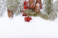 Weihnachtsrahmengrenze auf Weiß, Niederlassungen, Kegeln und roten Beeren Lizenzfreie Stockbilder