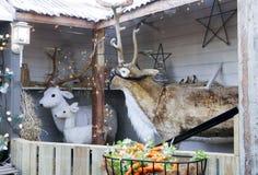 Weihnachtsrenanzeige Lizenzfreie Stockfotos