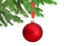 Weihnachtsroter Ball, der an einem Tannenbaumast lokalisiert hängt Stockfotos