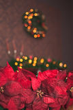 Weihnachtsrotpoinsettia Lizenzfreie Stockfotografie