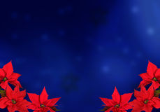 Weihnachtsrotpoinsettias Lizenzfreie Stockfotos