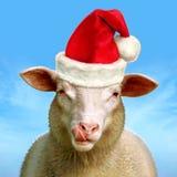 Weihnachtsschafe Lizenzfreie Stockfotografie