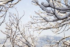 Weihnachtsschnee-Hintergrund mit Baumasten und Schneeflocken Lizenzfreies Stockbild