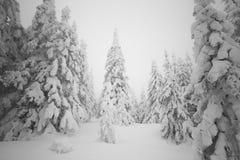 Weihnachtsschneebedeckter Morgen im Wald Weihnachtsbaum umfasste Esprit Stockfoto