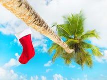 Weihnachtssocke auf Palme am exotischen tropischen Strand gegen blauen Himmel Stockfotos