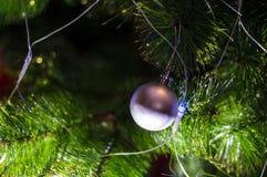 Weihnachtsspielzeug auf einem einzelnen Zweig Weihnachtsbaum Lizenzfreies Stockbild