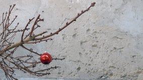 Weihnachtsspielzeug auf einem trockenen Tannenbaumast Stockfotos