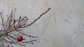 Weihnachtsspielzeug auf einem trockenen Tannenbaumast Stockbilder