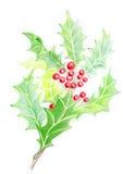 Weihnachtsstechpalme Lizenzfreies Stockbild