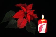 Weihnachtsstern Stockbild