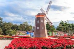 Weihnachtsstern, roter poinesettia Garten und Windkraftanlage - chri Lizenzfreie Stockbilder