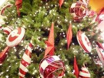 Weihnachtsstern und -kugel Lizenzfreie Stockfotos