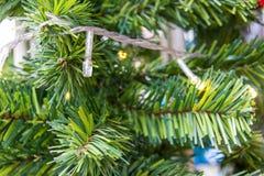 Weihnachtstannenbaumast Lizenzfreies Stockbild