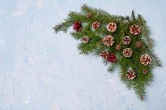 Weihnachtstannenbaumaste mit Kegeln auf blauem Hintergrund Stockfotografie