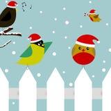 Weihnachtsvögel Stockfoto