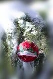Weihnachtsverzierung auf dem Schnee bedeckte Kiefer Lizenzfreie Stockfotografie