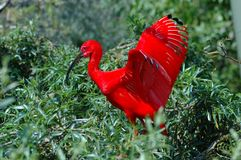 Weihnachtsvogel. stockfoto