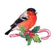 Weihnachtsvogelfink auf Zuckerstange und Mistelzweig watercolor stock abbildung