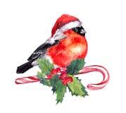 Weihnachtsvogelfink in rotem Sankt-Hut auf Zuckerstange und Mistelzweig watercolor stock abbildung