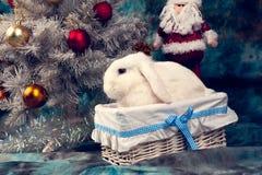 Weihnachtsweißes Kaninchen im Korb Stockfoto