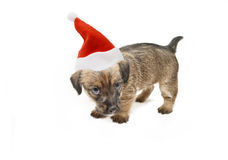 Weihnachtswelpe Lizenzfreies Stockfoto