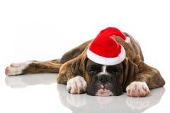 boxer hund weihnachten stockfotos 163 boxer hund. Black Bedroom Furniture Sets. Home Design Ideas