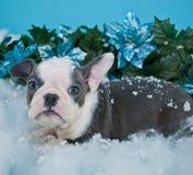 Weihnachtswelpe Lizenzfreie Stockfotos