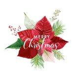 Weihnachtswinter-Poinsettia-Blumen-Karte oder Hintergrund mit Platz für Ihren Text Lizenzfreie Stockfotografie