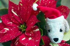 """Weihnachtszeit †""""lustiges Spielzeughundegesicht Stockbilder"""
