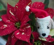 """Weihnachtszeit †""""lustiges Spielzeughundegesicht mit warmem rotem Plaidhintergrund Lizenzfreie Stockbilder"""