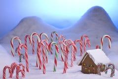 Weihnachtszuckerstange-Waldblau-Sonnenuntergang Lizenzfreie Stockfotos