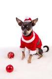 Weihnachtszusammensetzung mit pincher Hund Stockbild