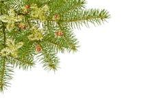 Weihnachtszweig Stockfotografie