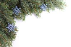 Weihnachtszweig Lizenzfreies Stockfoto