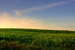 Weiland bij Zonsondergang Stock Foto