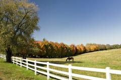 Weiland dat met kleurrijke bomen wordt gevoerd Stock Fotografie