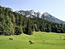 Weiland in de Alpen Royalty-vrije Stock Afbeelding