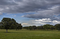 Weiland DE Extremadura Stock Afbeelding